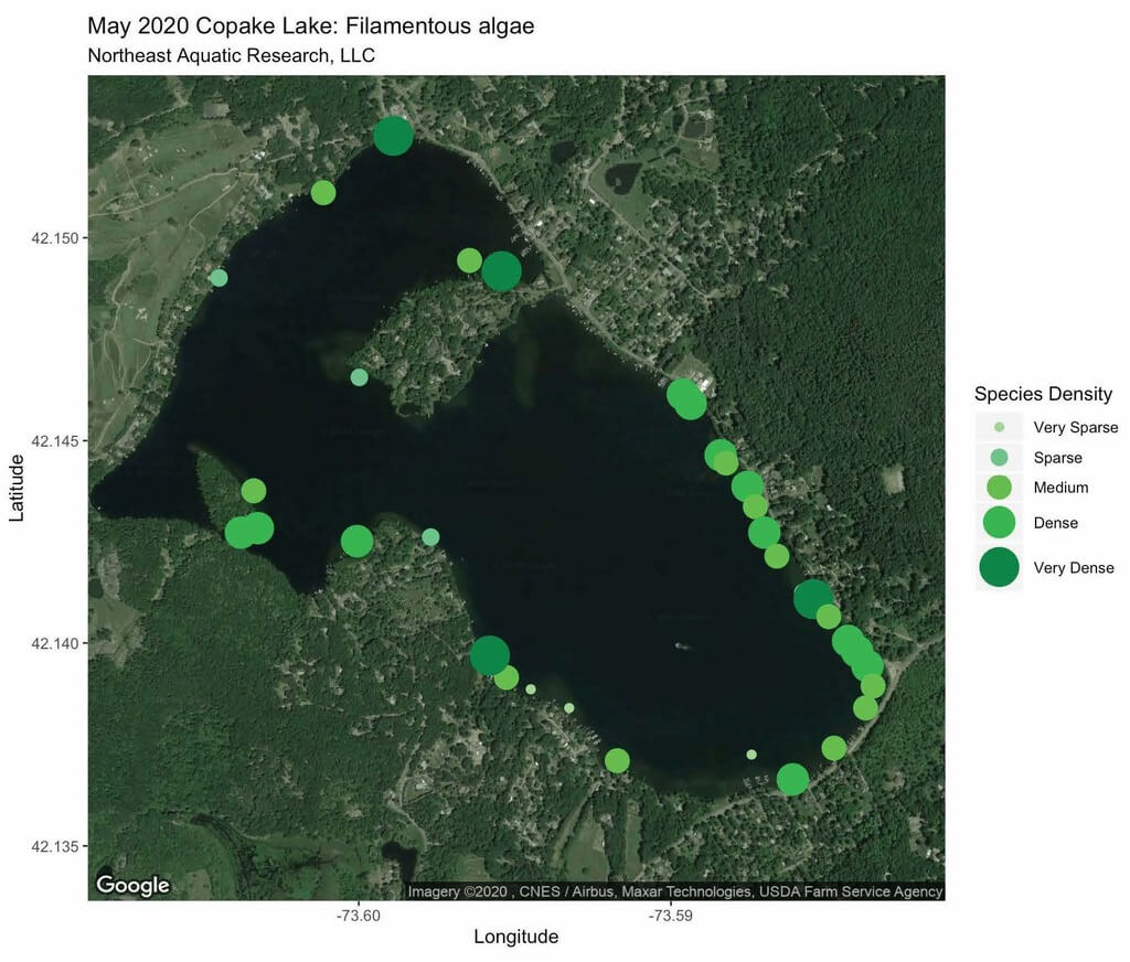 Map of Copake Lake with algae areas highlighted.